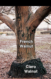 I need your help so i have come across these walnuts i have no idea what kind they are and - Growing french walnuts for a profit ...